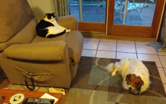Cat instructs dog